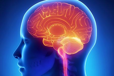 Brain enhancement product
