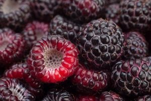 korean blackberry, korean bramble