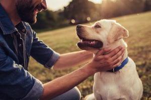 man affectionate to labrador dog outdoors